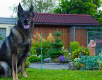 Электроизгородь 2 Дж 50х50 м 4 ряда (веревка 2 мм) для собак