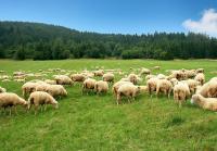 Электропастух на 9 Га 2-х рядный для овец, свиней, коз, КРС и других животных
