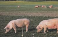 Электропастух на 9 Га 3-х рядный для КРС, телят и овец