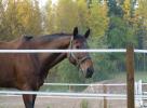 Электропастух из ленты на 1 Га 2-х рядный для лошадей