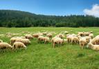Электропастух на 16 Га 3-х рядный для КРС, телят и овец