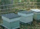 Электроизгородь 25х25 м 5 рядов для защиты пасеки от медведей
