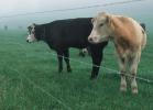 Электропастух на 6 Га 2-х рядный для овец, свиней, коз, КРС и других животных