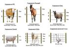 Электропастух 2 Дж на 1 Га 2-х рядный для коров с стойками